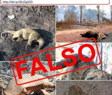 Verdades vs. fake news sobre el incendio en la Chiquitania